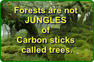 forests not jungles